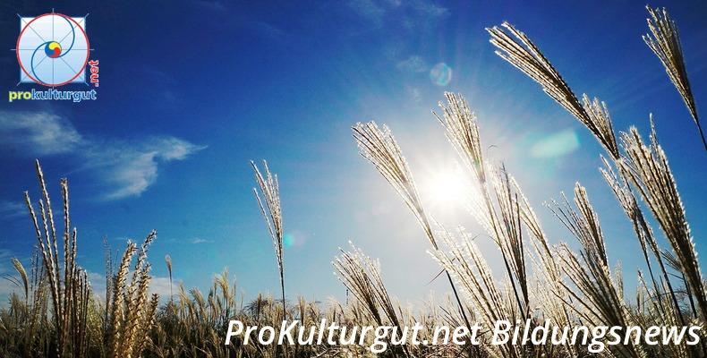 http://prokulturgut.net/bildungsnewsletter-urban-kuenstlerischer-workshop-cultura-reise-und-mehr